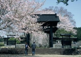 西山本門寺の黒門と桜