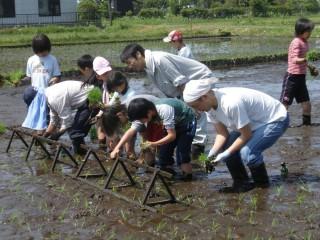 浮島の農業体験