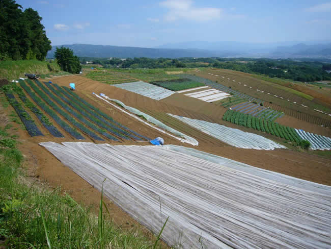 三島箱根西麓地区のモザイク模様