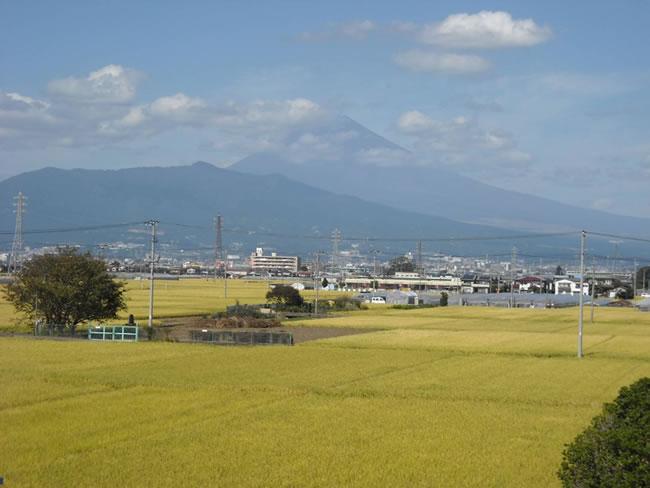 韮山多田の田園と富士山
