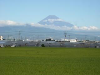 韮山のいちごハウスと富士山