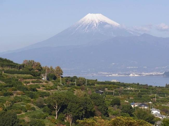 寿太郎みかんのふるさと西浦から望む富士山