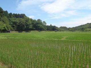 十足の田園風景