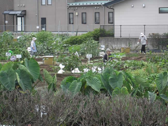 清水町久米田の市民農園