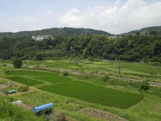 小山町所領の田園風景