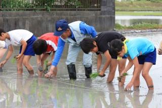 田植え体験をする小学生