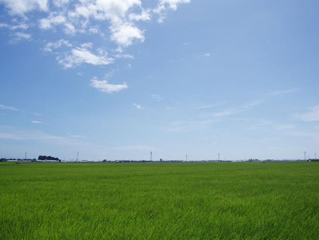 とうもんの里の田園風景