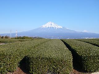 お茶畑からの富士山