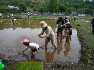 上長窪地区の園児の田植え