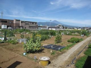 久米田の市民農園