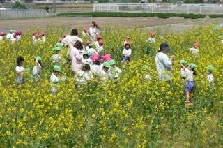 花が彩るかつての耕作放棄地