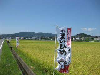 特別栽培米「細江まいひめ」