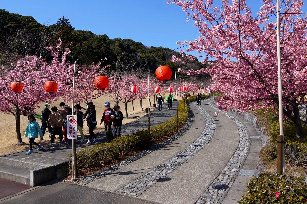 あらさわ紅桜並木