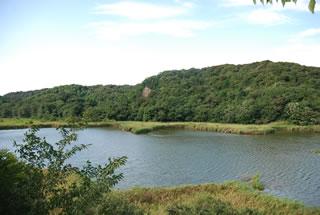 生き物の楽園、桶ケ谷沼