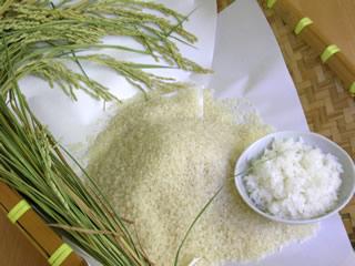 自慢のお米『桂流コシヒカリ』