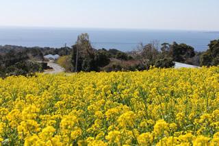 花咲く高原から海も望めます