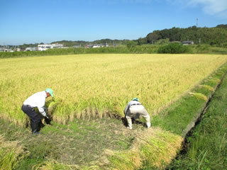 美味しいお米が育つ邑