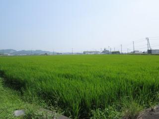 用水の恩恵、広大な水田
