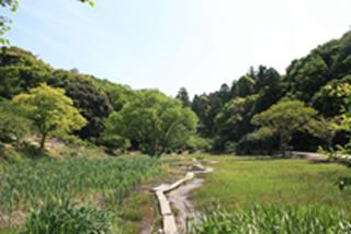 里山の木道