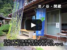 【動画】川根茶最北産地の桃源郷