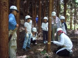 原木の伐採から行う椎茸栽培体験