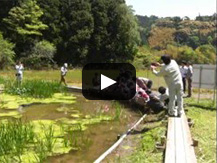 【動画】企業との協働で作られた地域自慢のビオトーブが育む豊かな生態系と住民の絆