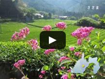 【動画】自然満喫!いきいき笹間