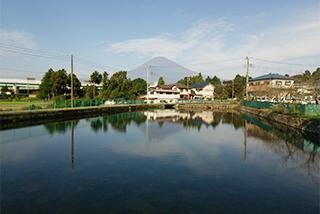 ため池越しに富士山を望む