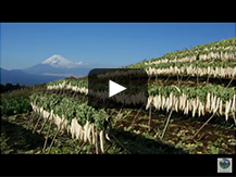 【三島箱根西麓地区(みしまはこねせいろくちく)】箱根の麓に広がる 農産物のパッチワーク