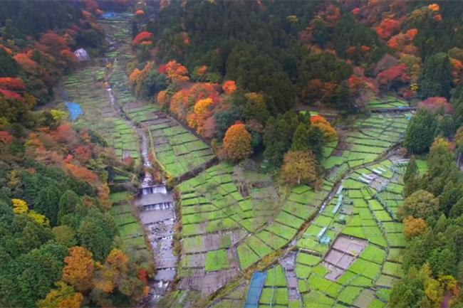 日本一の水わさびの邑