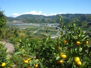 原・新丹谷からの海・富士山・みかん畑の眺望