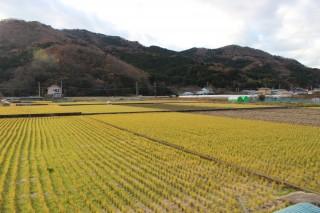 西伊豆町中地区の田園風景