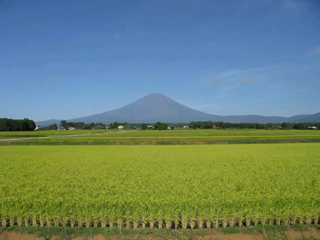 御殿場市西澤水系からの富士山