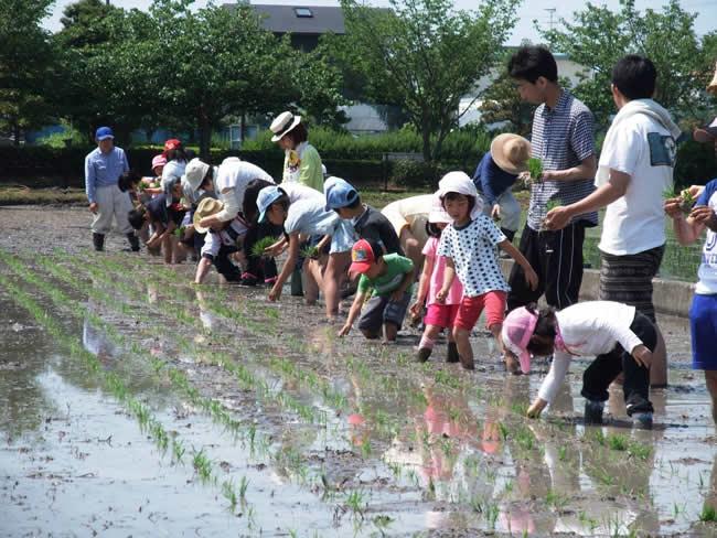 焼津市中の島の田植え
