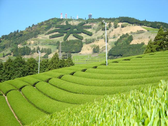茶文字の里 東山