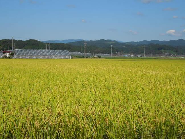 袋井市源氏とひまわりの里に広がる田園風景