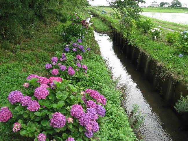 湖西市新所水とみどりのプロジェクト