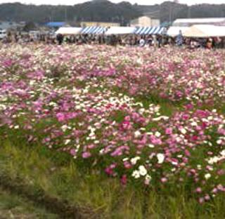 茶畑と花々にほっとくつろぐ風景