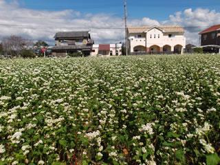 ソバ栽培に力を入れています