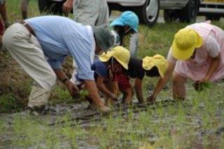 幼稚園を対象に行われた田植え体験