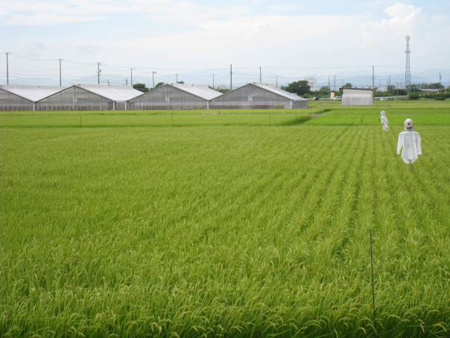 諸井里山の会(袋井市)