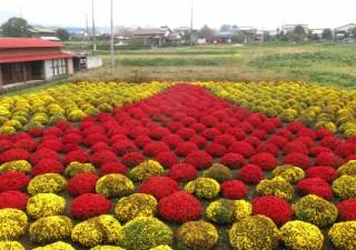 """住民が花で描いた""""富士山アート"""""""