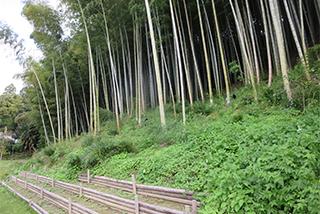 地域活性のカギ 竹林