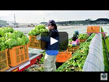 【吉田たんぼ (よしだたんぼ)】レタス栽培等を通じた高収益営農がつくりだす現代的な農村景観