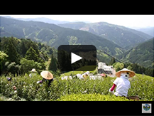 【奥藁科・大川(おくわらしな・おおかわ)】茶祖生誕の地 歴史の息づく山間の郷