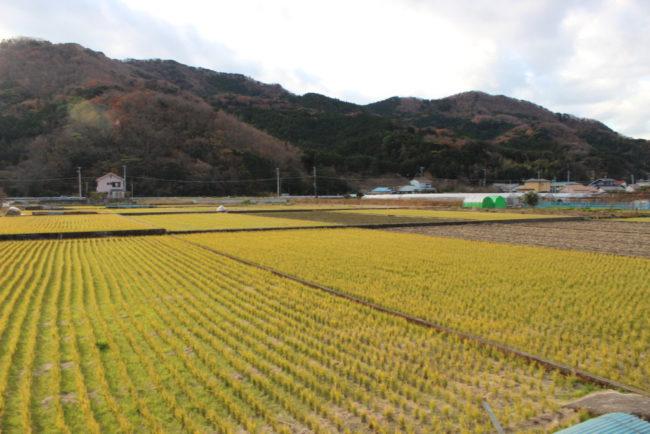 伊豆地域最大級の水田地帯