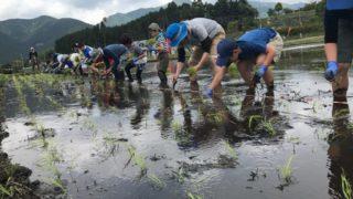 田植え・稲刈り農業体験