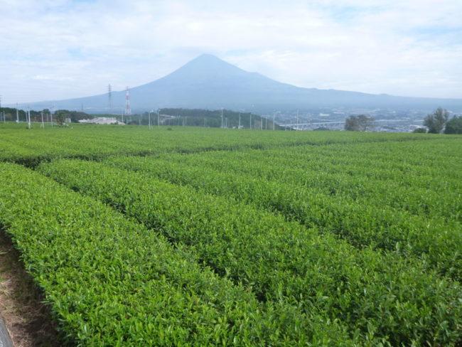 富士のやぶきた茶