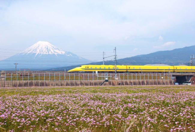富士山とれんげ
