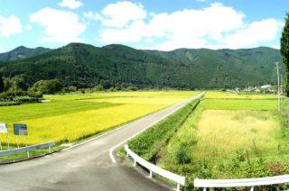 川根本町唯一の水田地帯